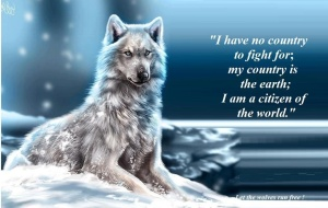 Beauty-the-beauty-of-wolves-33637565-960-608