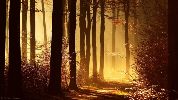 Forrest-photography-by-Nelleke-Pieters-11
